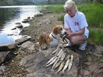 Sommer med hund